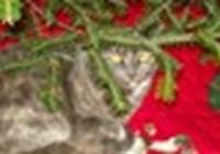 Jan123 avatar