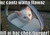 iLove_Cats.-1