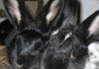 suzisknits avatar
