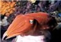 TheCuttlefish