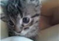 my_cat_kizzy