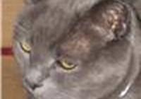 fuzzbuttsupercat
