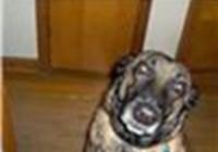 cheezdoghotburger01