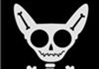 chihuahua_skeleton avatar