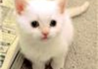 WhiteKitten avatar