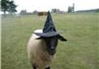 Sheepbaa