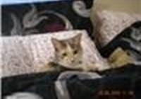 kittylover102