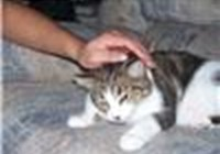 cheezbugercat64
