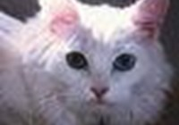 spifffan avatar