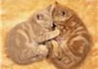 kittykat1234