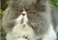 Mr_CAT