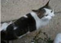 PopCATZ avatar