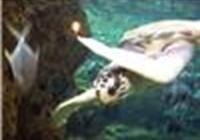 turtleurtle