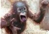 monkey31