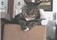 Kingcat01