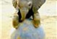 elephant1999