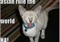 catbarrage