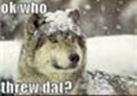 ChicagoWerewolf