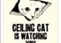 oneluckycat