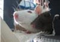 rats123