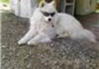 dogsandlols