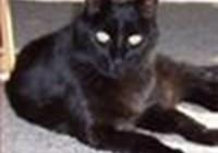 blackcat725