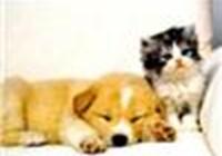 lionsrgr8