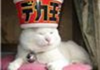 KittyBonsoir