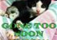 catbyte6