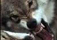 lostwolf18
