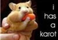 I_has_a_Karot