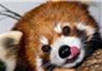 gigla102 avatar