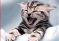 badlittlecat