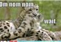 KittyKatLuvz