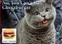 kittehlikecheezburger