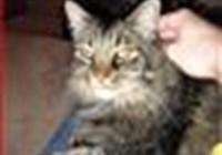 kitty143