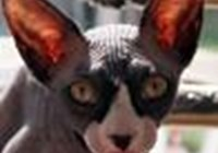 Kittyfart