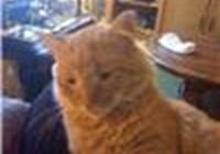 Templecat196 avatar