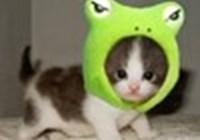 cat101_h18