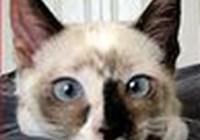 mamarosa avatar