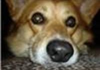 Chuchkaite avatar