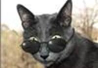 CatChatte