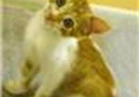 Kittyface0597