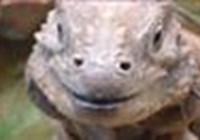 DrakenDame