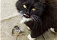 CatFeather