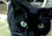 kittycat74