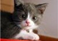 kittycatz141