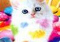 Marmie avatar