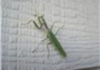 froggiesl