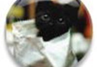 tres_gatos